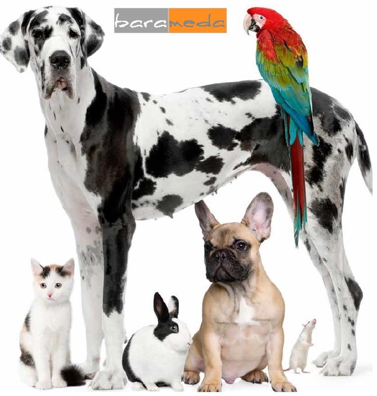 Cardiva Veterinary